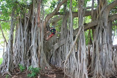 2017TravelerContest-AmyGoetsch-OahuHawaii-HumbleTravelServiceLtd -433000