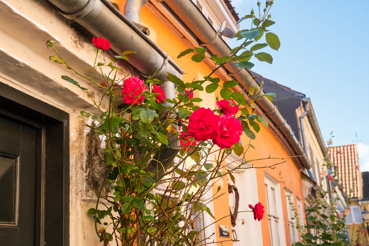 The roses help to bring some color to the homes