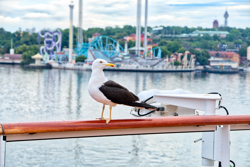Local Visitor Onboard