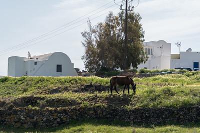A mule on Santorini