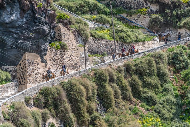 Mules of Santorini