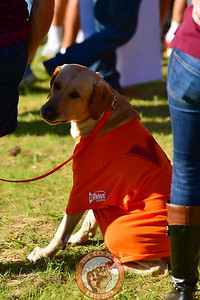 Faithful Hokie  Pup, all dressed up for  College GameDay!