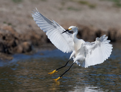 Birds-110