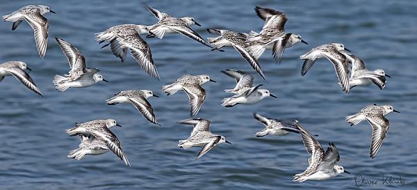 Birds-113