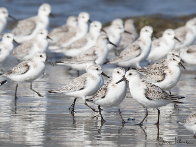 Birds-103