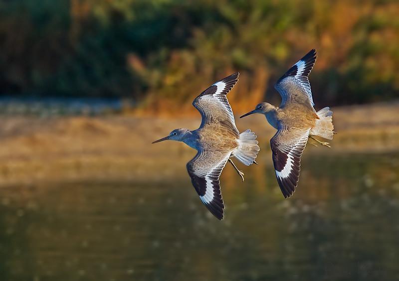 Birds-114