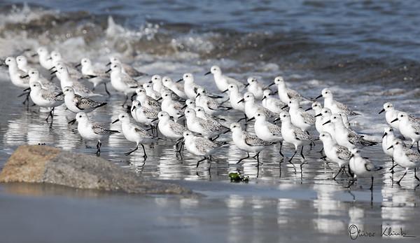 Birds-102