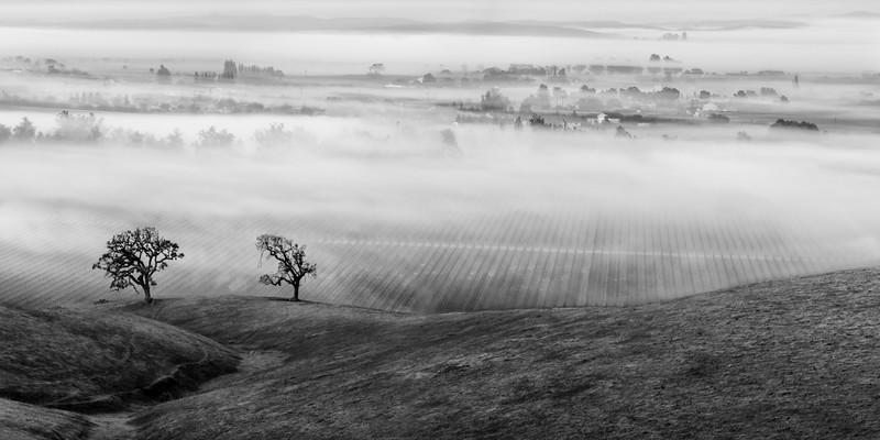 Landscape--012