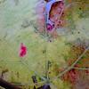 Last grape leaf clinging to the vine
