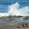 Sea lions and surf La Jolla