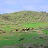 Sycamore trail horse train