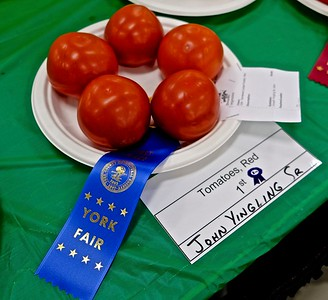 Red Tomatoes, 1st Place, John Yingling Sr.
