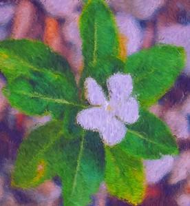 White Flower, Impressionist