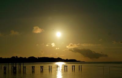 Sunrise with Bird Cedar Key
