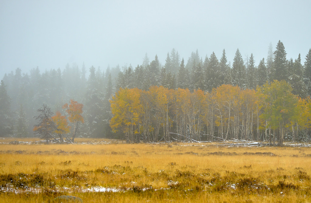 Justin Sheely | The Sheridan Press<br /> Fall colors are seen through the fog at Burgess Junction in the Bighorn National Forest on Saturday.