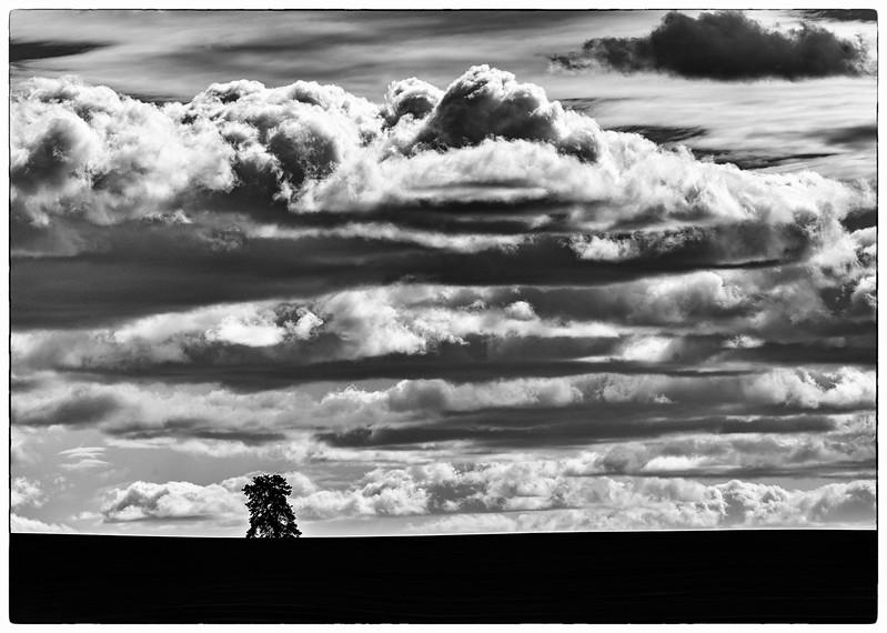 Lone tree, unfolding sky