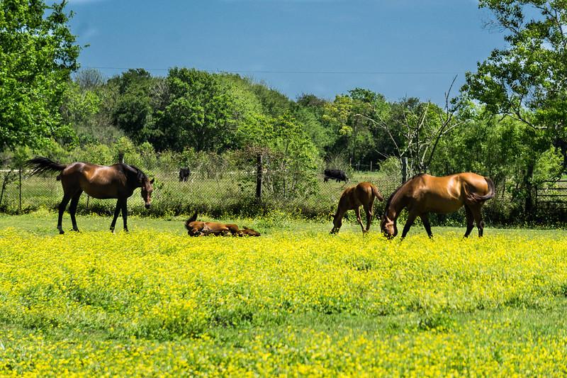 Texas Spring scene in Winnie, TX