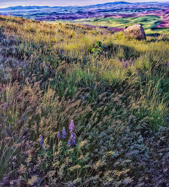 Wildflowers at Steptoe Butte