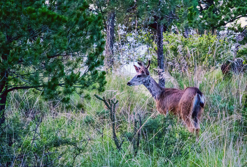 Fauna near McDonald Observatory