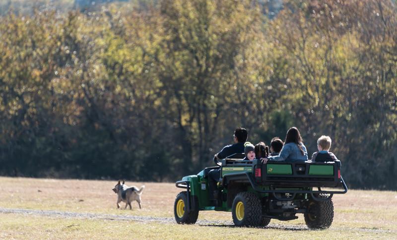 Gatoring on the farm