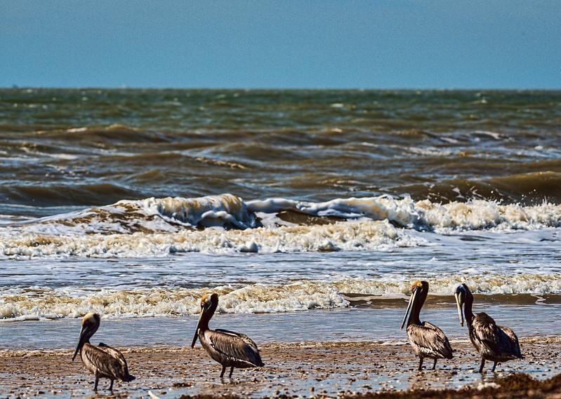 Crowded Texas beach