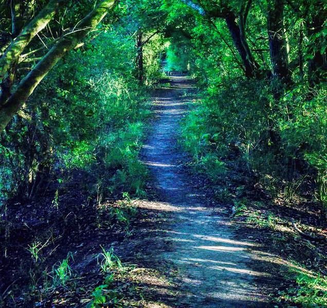 The path chosen