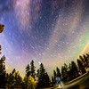 night sky and aurora ove thick wooded forest in spokne washington