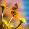 autumn season flowers and butterfly