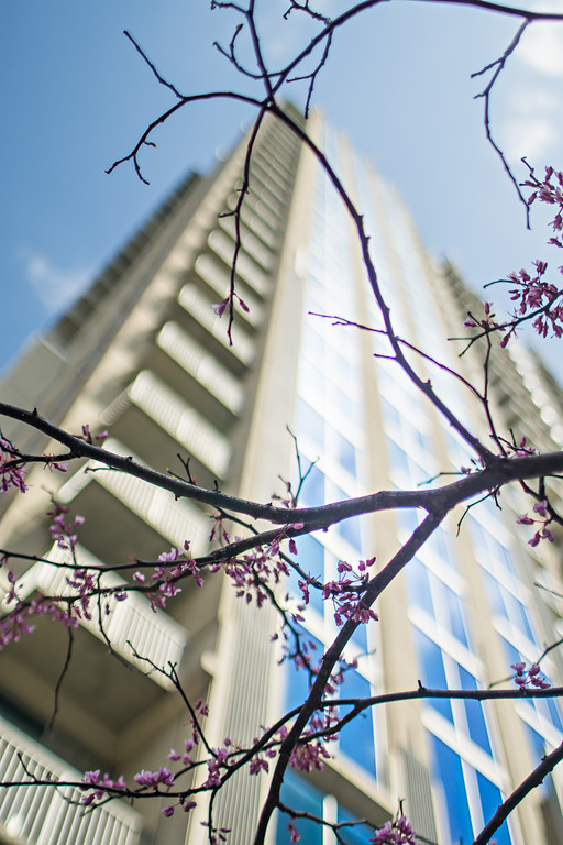 spring in the city with highrise building