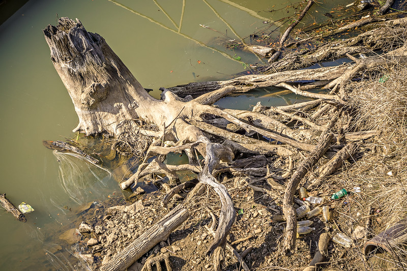 treet roots and stump near river