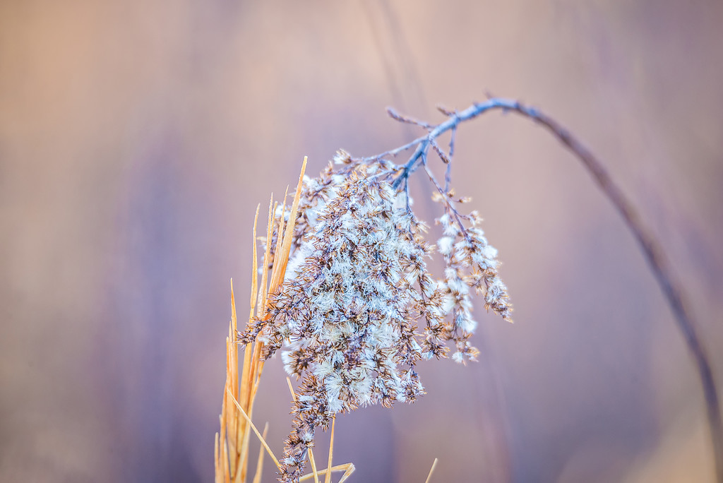 wild grass and bokeh blur background