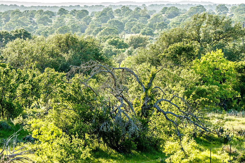 southern texas landscapes of nature at sunset near willow city loop