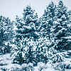 white cold frozen winter forest in washington state
