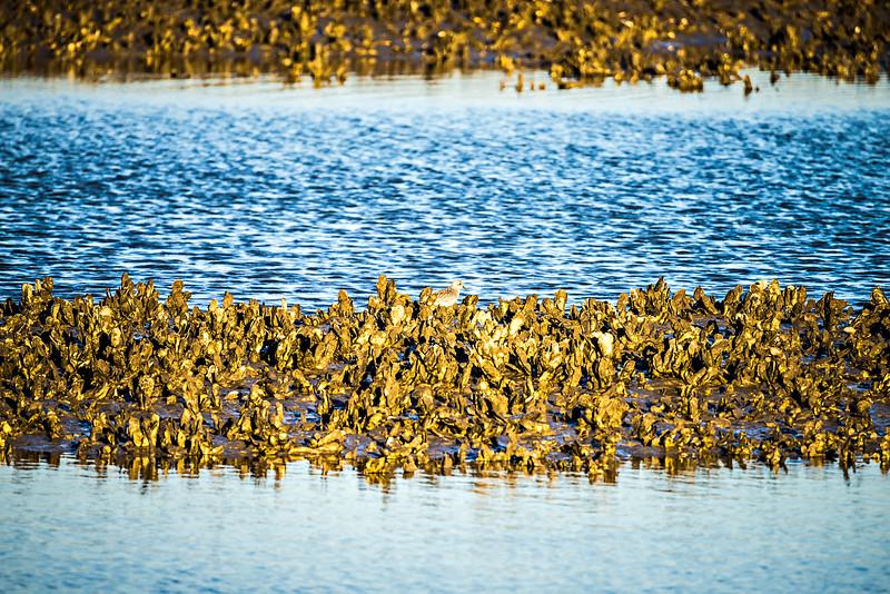 clam reef islands near chaleston south carolina plantation inlet
