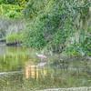 scenes at botany bay plantation near charleston south carolina