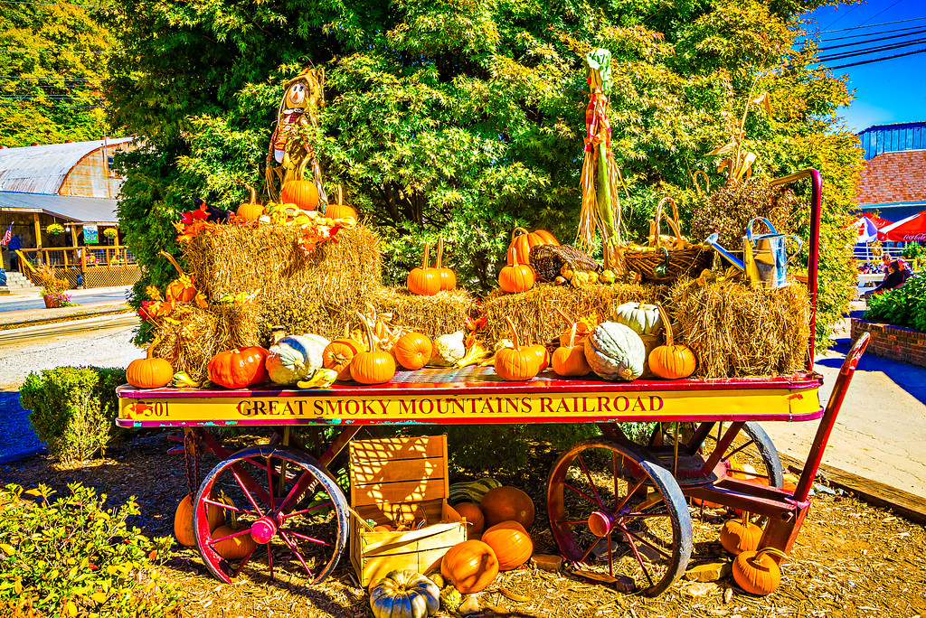 pumpkins harvest set in small town