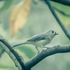 chickadee perched on a tree in autumn park