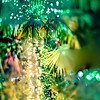 palm trees decorated with christmas lights in gardens