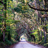 country road with oak trees at plantation