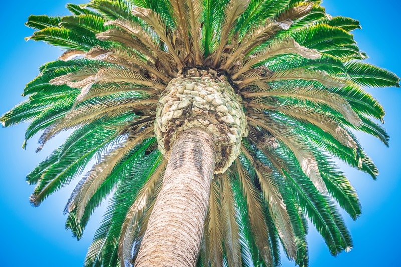 beautiful palm tree on sunny day with blue sky