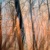 abstract forest woods at sunset time