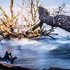 old dead trees on shores of edisto beach coast near botany bay plantation