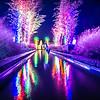 Lights, Christmas, Light, Christmas tree, Green, Color, Red, Blue, Colorful, Shiny, Celebration, Festive, Holiday, Xmas, New, Seasonal, Outdoors, Outdoor, Tree, Photo, Trees, Winter, Year, City, Illumination, Merry, Night, Glow, Decorations, Eve, Magic,