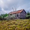 abandoned log cabin house deep woods in texas