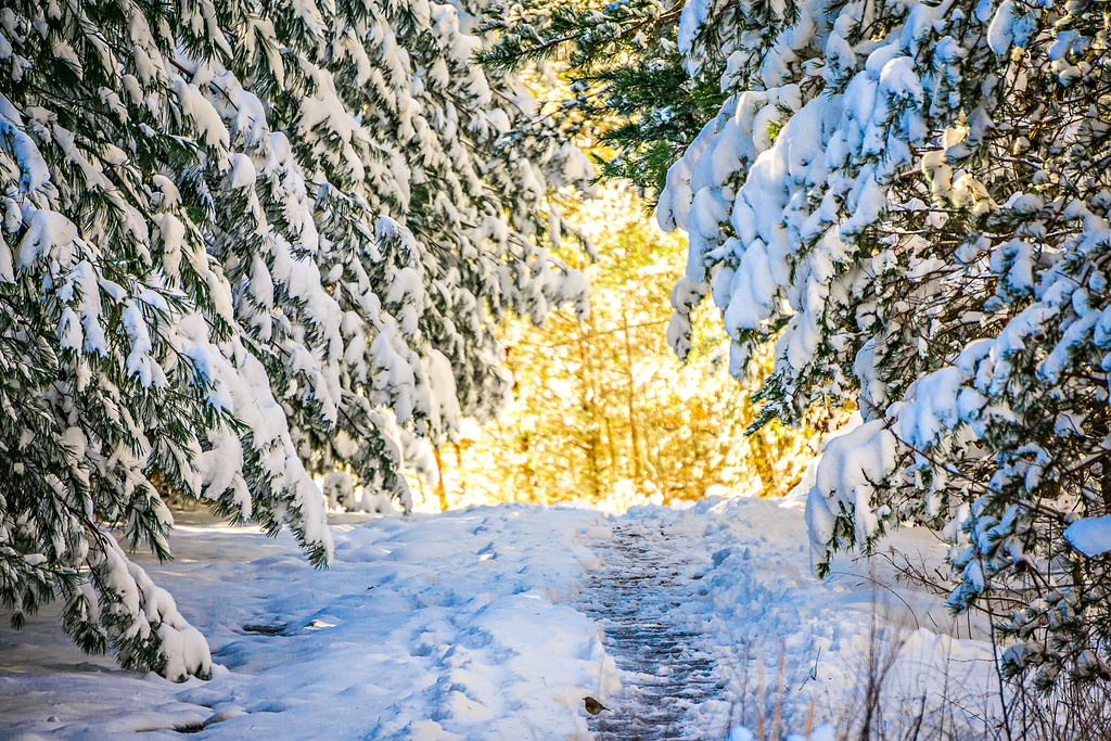 snow covered hiking path in the forest