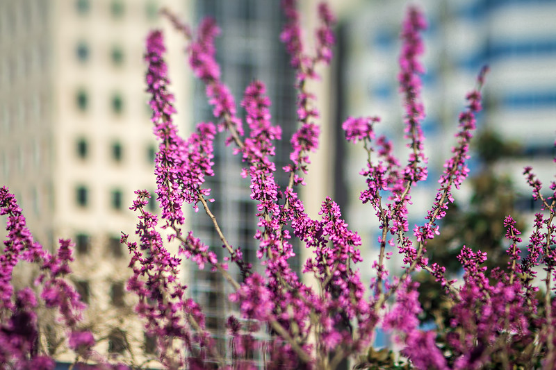 early spring bloom in the city