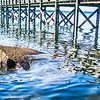 lake murray south carolina coast and pier