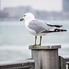 seagulls on posts around the coastal usa scenes