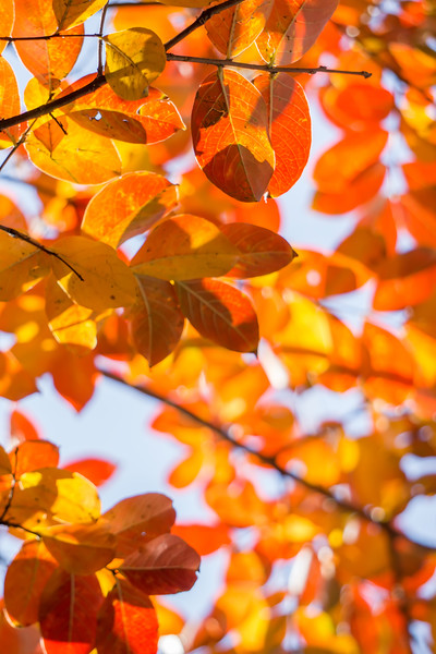 autumn season leaves on a tree in sun light