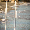 fishing rods dug into ocean beach coast
